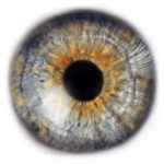 Blippar – A $1 Billion Visual Search Company