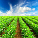 6 Agriculture Robot Startups for Farming